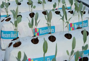 Grow Bags manufacturer in Pollachi
